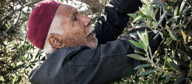 Domaine de Segermès - huile d'olive bio